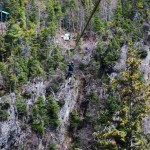 steep cliff with pine trees